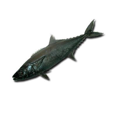 масляная-рыба